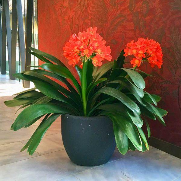ROTO cvetlično korito Rumba