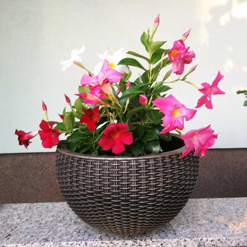 ROTO cvetlično korito Bambus H
